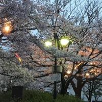 お堀の桜 2018/03/31 08:45:06