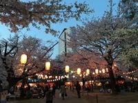 高崎公園のお花見