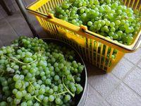ぶどうの収穫と二色のジャム作り