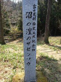 富士見村のザゼンソウ