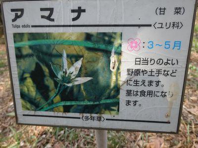 岩宿のカタクリ群生