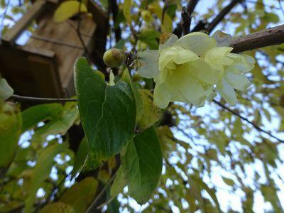 「ブログ再開」と「冬の花々」
