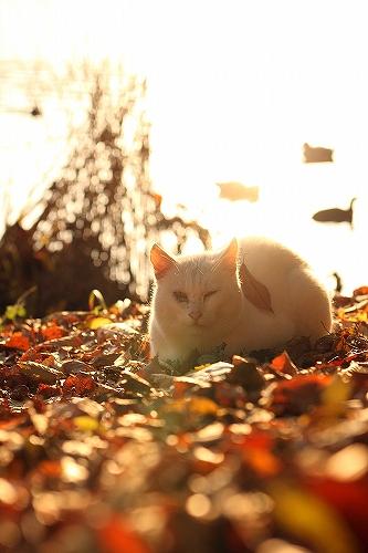 野良猫と放射能