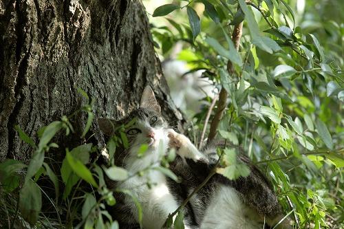 野良猫の写真