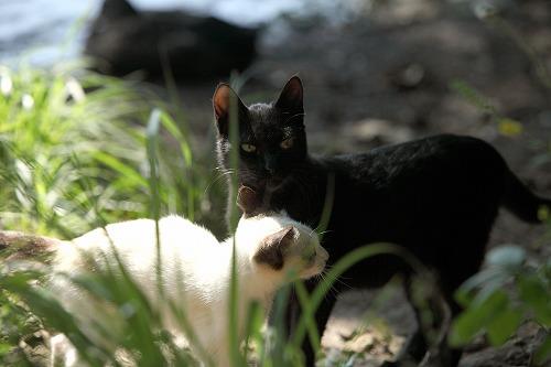 一碧湖の猫
