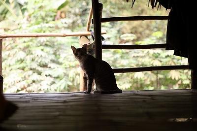 カンボジアの猫 3