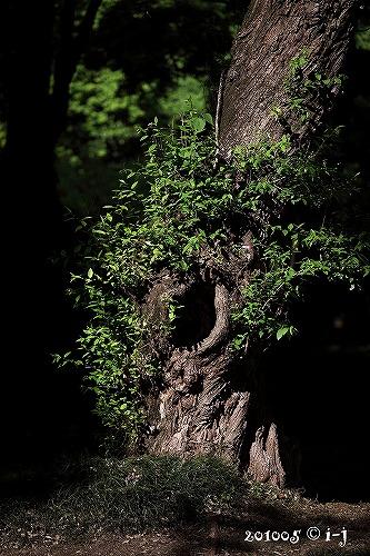 森猫201005