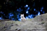 群馬のとある森の猫4