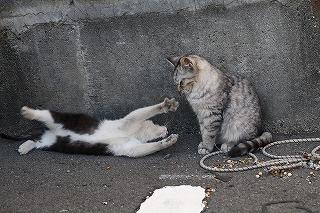 沼津港の猫
