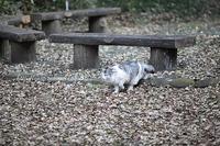 群馬のとある森の猫5