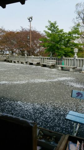 桜の観音山