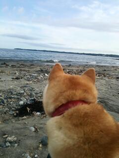 海と空と柴犬