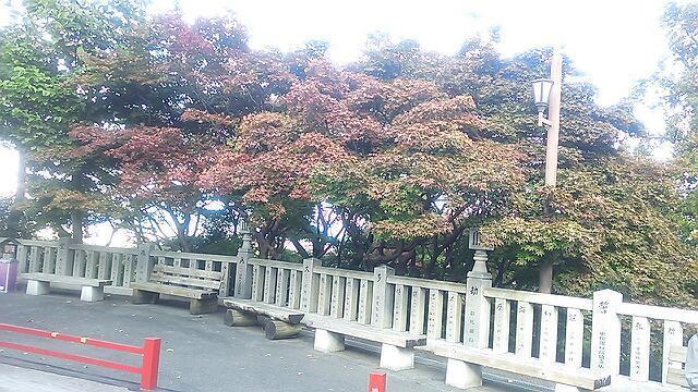 観音山の紅葉