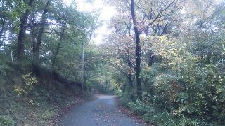 また観音山の紅葉