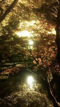 洞窟観音徳明園の紅葉ライトアップ
