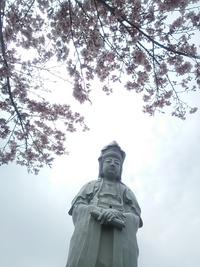 桜の開花 2014 3.26