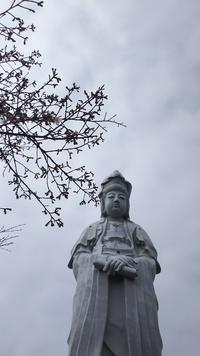 白衣観音と桜の花