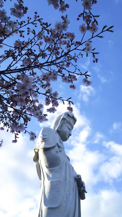 白衣観音と桜の花 2019
