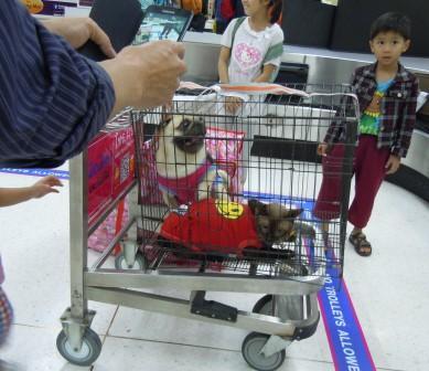 荷物??・・・犬猫
