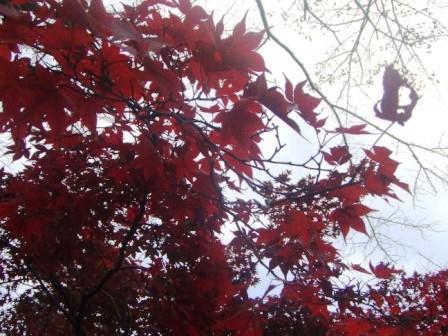 紅葉の一路堂