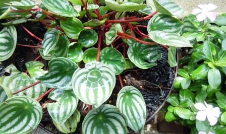 また、植物は面白い