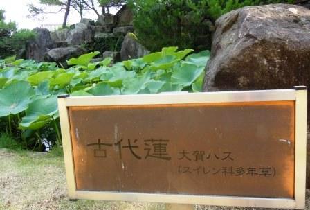蓮の花 多胡の古碑