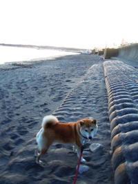 夕空と海と犬