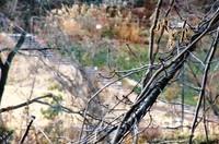 カッパピア跡地 現在 2012.12