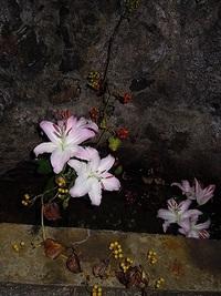 悠久の魂 生け花