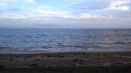 海を見る犬