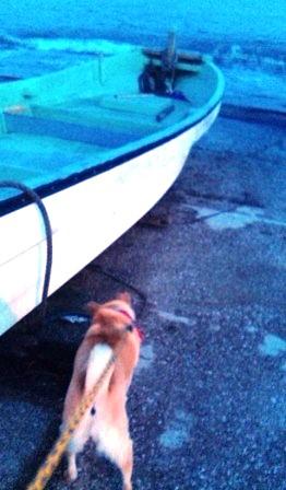 犬と夕日と海と