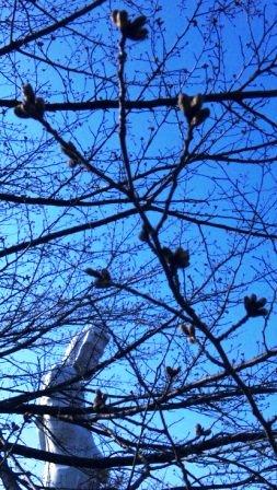 慈眼院の桜 2012・4・2