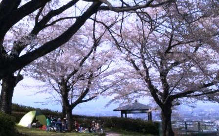 花見 2012・4・15
