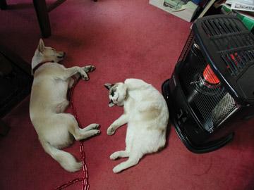 ホカホカな犬と猫