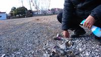 子供の遊ぶ、遊園地に有害スラグがいっぱい