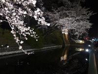高崎の桜は、水の中