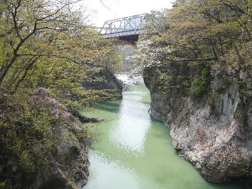 ムラサキツツジ 滝見橋