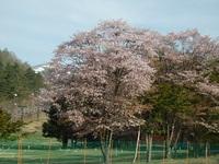 芽吹きの季節となりました。