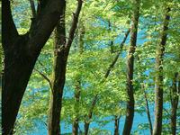 新緑と奥四万湖
