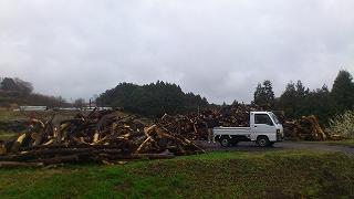 自然の森 薪イベント開催!