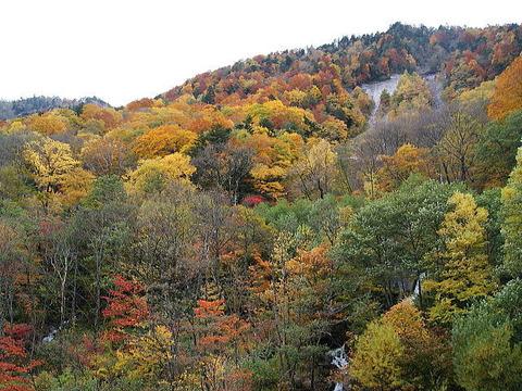 飛騨高山の紅葉♪