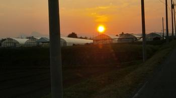 杉板とコスモスと夕日