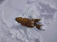 雪遊びラスト!