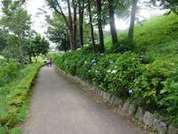 アジサイを見に荻窪公園へ!