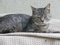 猫の、武蔵の生き方