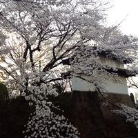 高崎花盛り