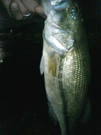 宮城FBで夜釣りをしてきました