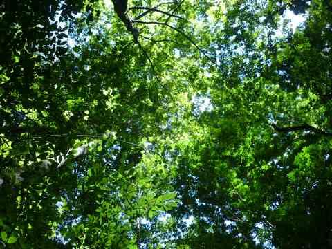 今週も森林セラピー体験ウォーク