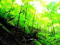 森林セラピー標高1,200m