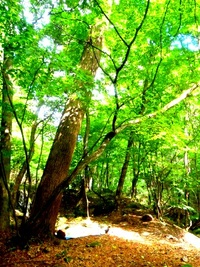森林セラピー歩行距離